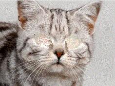 cat no eyes no