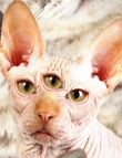 cat  eyes 3